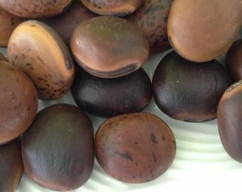 Sea Beans - Mucuna - Ojo de Buey - brown hamburger - Drift seeds - Ox Eye Seeds - brown seeds - Natural - Surf tumbled - Hawaiian seeds