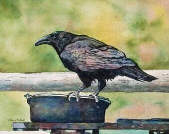 Watercolor ORIGINAL, - Plunder - raven, bird, crow, dutch oven, camping, thief, black, watercolor, watercolour, original