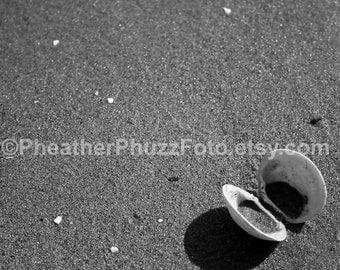 Black & White Clam Seashell Wildlife Photography Fine Art Nature Print Beach Sand Photo Pacific Northwest Decor Ocean Marine Wall Art