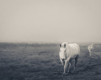Horse Photography, Washington Landscape Photo, Modern, Horse Photo, Animals, Farm, Fine Art Photography Print, Black & White Modern Decor