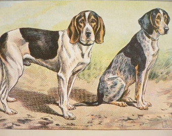 ANTIQUE 1907 small SWISS HOUND dog signed dog print Chromolithograph Mahler German artist Collectors item Christmas,Birthday gift Authentic