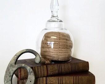 Vintage Glass Oversized Cloche Bell Jar Dome, Terrarium