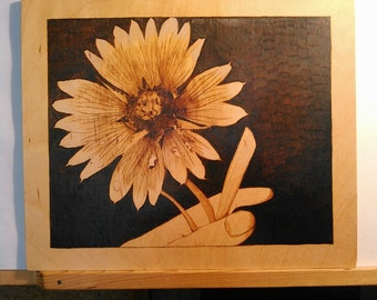 Sombrero flower echinacea with dew hand woodburned pyrogrpahy art