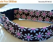 """Sale 50% Off Chocolate Brown and White & Pink Daisies Dog Collar - """"Chocolate Daisies"""" - NO EXTRA CHARGE for colored buckles"""