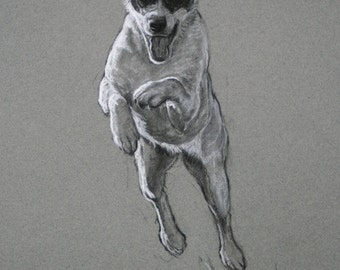 Jack Russell Terrier dog art print limited edition fine art print 'Leap of Faith' from an original charcoal and chalk drawing