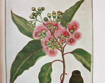 A Research On The Eucalypts and Their Essential Oils by Richard T Baker and Henry G Smith