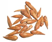 BALM of GILEAD BUDS, Organic - Populus Candicans - Traditionally Used since Ancient Times, in Folklore and Scripture