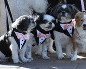 Black Satin  Dog Tuxedo . Choice Of Bow Tie Colors