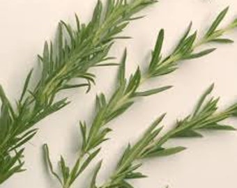 SUMMER SAVORY HERB Seeds 50 fresh seeds ready to plant in your garden