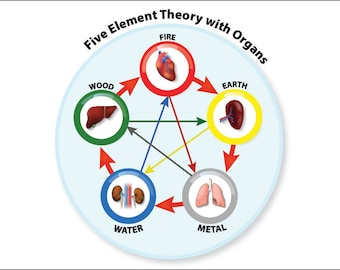 LAMINATED Chinese Medicine Five Element Chart Illustrating the Relationship Theory with Organs Acupressure Energy Healing Chi Kung QiGong