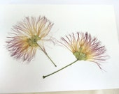 Handmade Blank Pressed Mimosa Flower Plumes Greeting Card All Occasion Stationery Nature Card Gift Real Dried Flowers Cards Floristry Craft