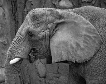 Instant Download African Elephant - Digital Photo - Digital Animal Photography - Digital Zoo Animal Photography - Digital Elephant Photo