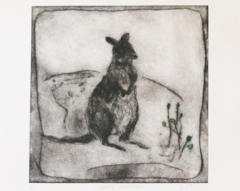original wallaby etching SWAMP WALLABY drypoint etching by Wendy McDonald