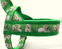 Norway harness with pattern Maltese dog. For dog, Maltese, maltipoo, poodle, white dog