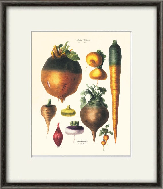 Kitchen Art Vegetables Print Botanicals Kitchen Art: Antique Botanical Art Print Vegetable Art Kitchen Art Print
