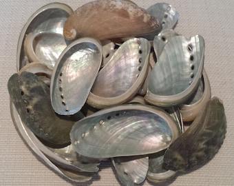 Beach Decor, Seashells, Shells, Craft Shells, Nautical Decor, Abalone Shells,Green Donkey Ear Abalone Shells,