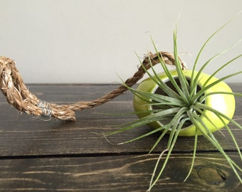 Chartreuse Ceramic Wheel Thrown Air Plant Holder