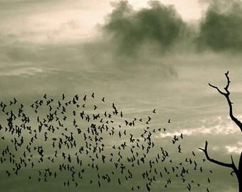 Birds Flock Flying Black Starling murmuration Leafless tree Wall decor B/W fine art print