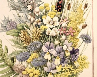 Wonderful Marjolein Bastin Full Color Print Entitled Wildflowers and Butterflies * Beautiful 11 x 14 Framable Nature Print