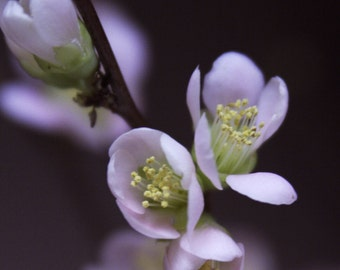 Spring Bud #24