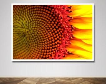 Photograph - Sunflower Flower Close up Macro Fine Art Photography Print Wall Art Home Decor