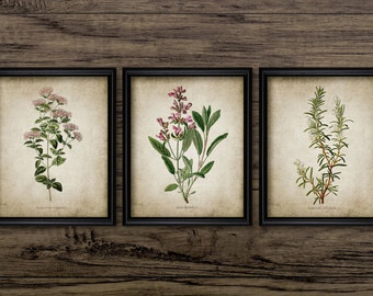 Herb Print Set of 3 - Oregano - Rosemary - Sage - Kitchen Herb - Digital Art - Printable Art - Set Of Three Prints #167 - INSTANT DOWNLOAD