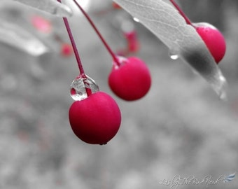 Berry Photography - Red Berries Decor, Selective Color Print - Fine Art photo, Nature Picture, -109