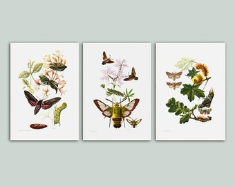 Original vintage print SET of 3 lovely Insect prints from 1961, Butterflies and flowers, moth, caterpillar