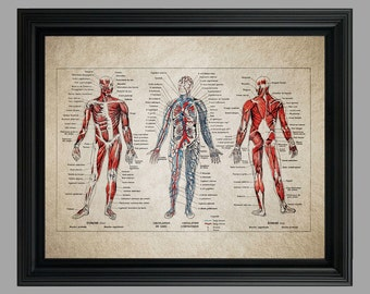 Vintage Human Anatomy Print - Doctor Office Decor - Medical Student - Medical Art Poster - medizinstudent - Body Skeleton #C-001
