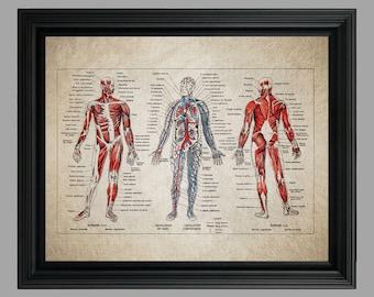 Vintage Human Anatomy Print - French Encyclopedia Anatomy Print - Medical Poster - Medical Student - Vintage Anatomy - Body Skeleton #C-001