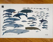 Sea Mammals of the North Atlantic Poster