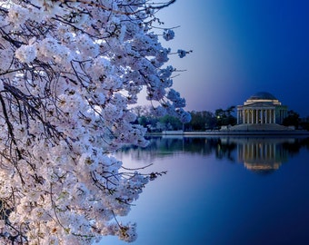 Cherry Blossoms -- Tidal Basin, Washington DC