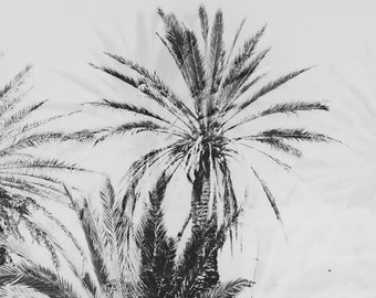 Palms, Greece, Crete / photography / download file / fine art