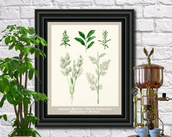 Herbs Botanical Print Vintage Herbs Illustration Kitchen Wall Art Poster  0452