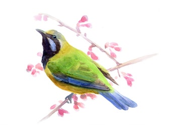 watercolor bird painting print, animal painting, bird print,bird flower painting print