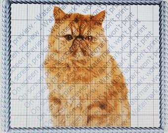 PERSIAN CAT Edible Image