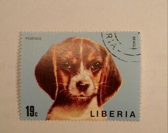 Liberia Beagle Postage Stamp