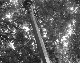 Black & White Photograph - London Lamp