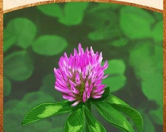 clover tarot print