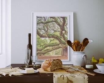 Angel Oak Tree, Angel Oak Photography, Charleston Photography,  Charleston Art, South Carolina Photography, SC Landscape, Forest FIne Art