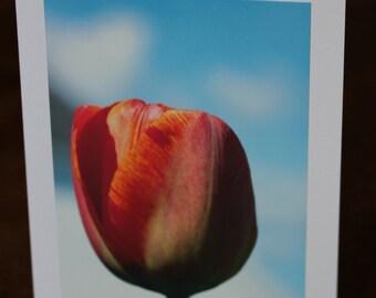 Tulip card - any ocassion
