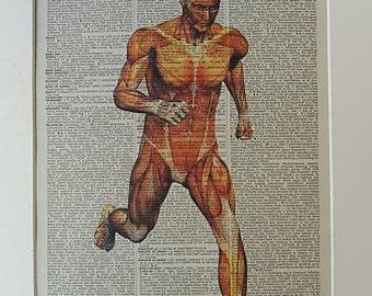 Anatomy Print No.106, body poster, anatomy art, medical poster, medical gift, the heart, medical school, running gifts, dictionary art