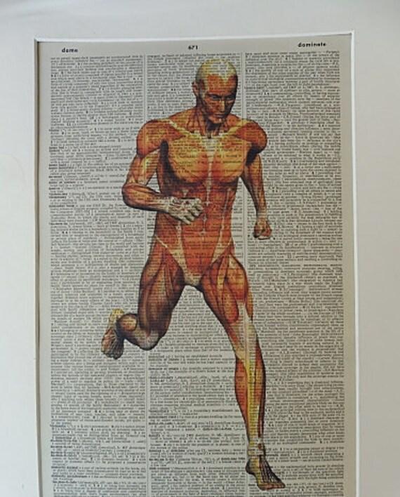 Anatomie Druck No. 106 Körper-Plakat Anatomie Kunst