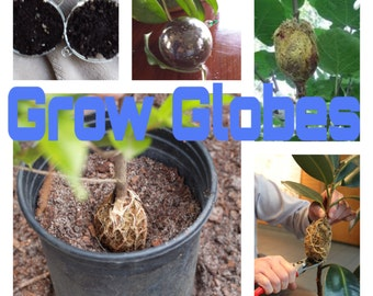 Grow Globes *Easy Root Propagation* 70mm Size