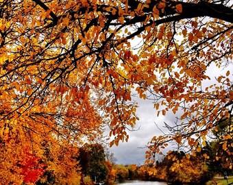 Fall Landscape Print, Landscape Photography, Fall Decoration, Fall Decor, Fall Leaves, Fall Trees, Nature Photography, Fall Photo, Fall Tree