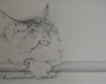 Patient Cat - Glycee Fine Art Original Pencil Drawing