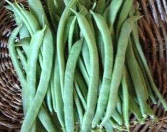 Green Bean Seeds - Homegrown Organic - Free Shipping