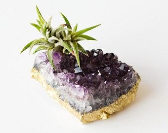 Amethyst Crystal Air Plant, Gold Desk Accessories, Boho Decor, Housewarming Gift, Air Plant Terrarium, Friend Gift Best Friend Birthday Gift