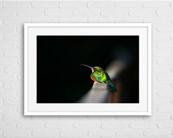 Humming Bird Glowing in the Dark Art Photo with Frame