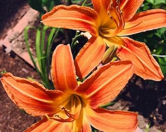 Orange Flowers, Photography - Digital Download